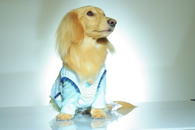 犬旅コンサルタントMiwaのブログ-SUPER MODEL