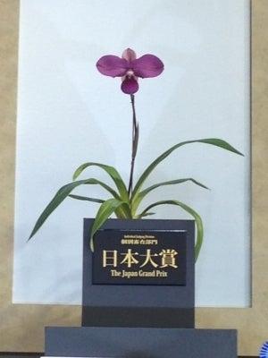 ももたろう 花と果物の谷 (桃太郎 洋蘭&葡萄 桃太郎)