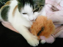 PFL★MIKIのブログ-2013012409390000.jpg