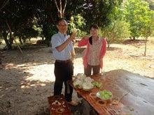 カンボジアに導かれ~青年海外協力隊員プログラムオフィサーMiwa~-3