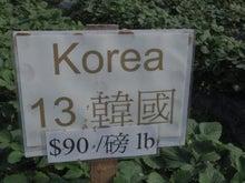 IMGP7309.JPG