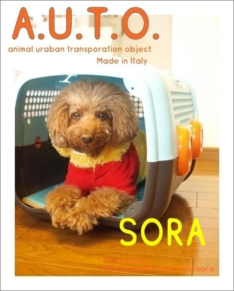 ソラっこ日記-Sora's Diary