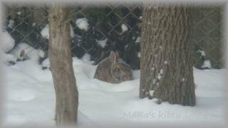 マナにゃんずDiary-Mana's kitty Diary