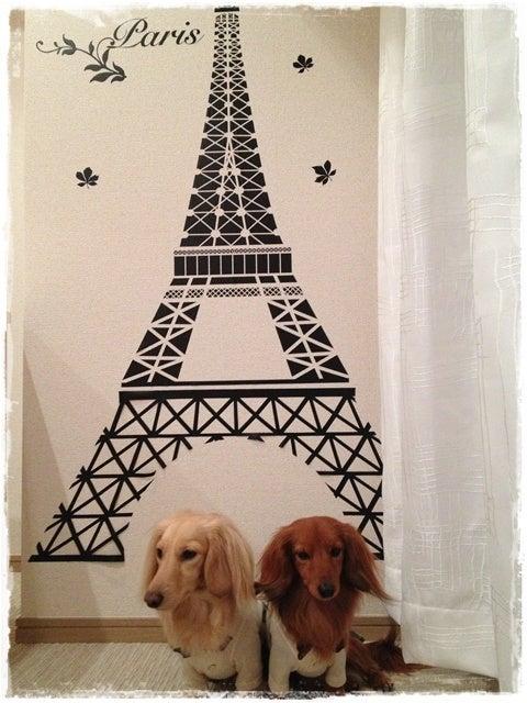 旅犬Lani&Leaのほほん風船記-犬旅倶楽部サロン