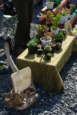 スタッフ(ぬ)のブログ-勝浦-寺市植物