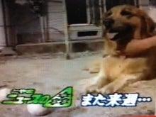 まことのブログニュースの森 ED TBS・JNN 01(AMB)コメント