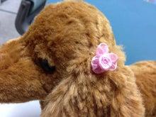 $ひろみちゃんと10pooのおきらくブログ-巻きバラモデル ピンク