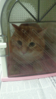 猫の処方せん-2013022819300000.jpg