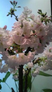 旬鮮旬彩 上吉のブログ-130302_174444.jpg