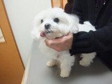 ペットの「がん」 ―レオどうぶつ病院腫瘍科―-全身像