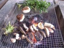 新鮮野菜収穫体験ツアー-体験④