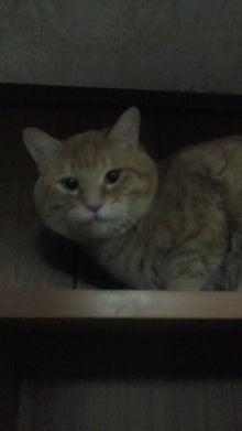 猫の処方せん-2013030221340000.jpg