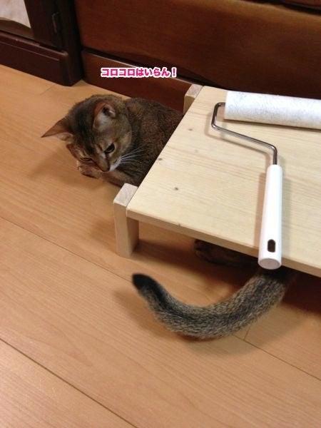 $うち、猫いてますねん。