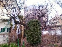 コミュニティ・ベーカリー                          風のすみかな日々-井口院の梅1