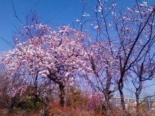 コミュニティ・ベーカリー                          風のすみかな日々-ピンクの梅