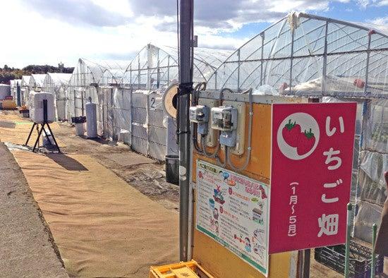 ひばらさんの栃木探訪-ひばらさんの栃木探訪 南那須観光いちご園
