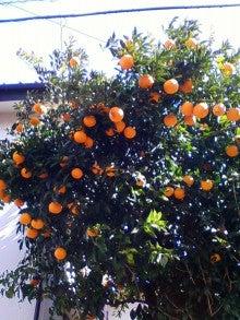 コミュニティ・ベーカリー                          風のすみかな日々-夏みかんの木
