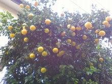 コミュニティ・ベーカリー                          風のすみかな日々-夏ミカンの木