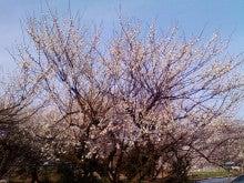 コミュニティ・ベーカリー                          風のすみかな日々-白梅