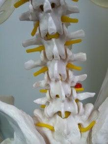 $腰痛・肩こりを整体&エクササイズで根本から改善!西新宿おくがわ整体院blog 新宿 西新宿 中野 渋谷-腰椎椎間関節