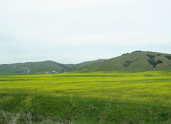 Love from California・・・-yellow flower