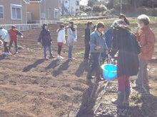 かもの子農園でボランティアしよう♪-ジャガイモ植付け01