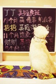 中国大連生活・観光旅行ニュース**-大連 猫カフェ Lazy Cats珈琲屋