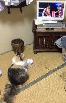 美猫ちゃんブログ-亀田大毅 猫