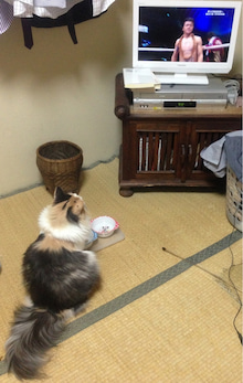 美猫ちゃんブログ-亀田兄弟 猫