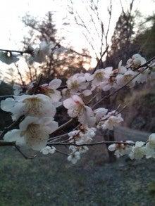 麦ももの しまんと ニュース(日記?)-20130311180928.jpg