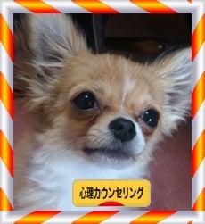 $仙台★カウンセリング★心理セラピールーム★Berry's Color-日本ブログ村心理カウンセリング