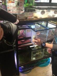 【グッピー園】山形の熱帯魚屋BLOG