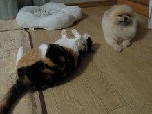 POmens' 虎太郎・虎次郎・虎三郎&猫の虎々奈
