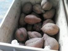 明石の野菜好き「かふぇ&れすとらん しふぉん」のブログ-NCM_0232.JPG