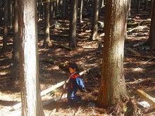森のひだまり
