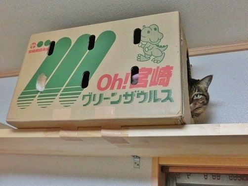 猫トモへの道。