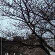桜の花の卒業式