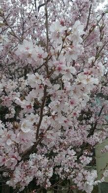 ~akkyの春夏秋冬~-PicsArt_1363788115255.jpg
