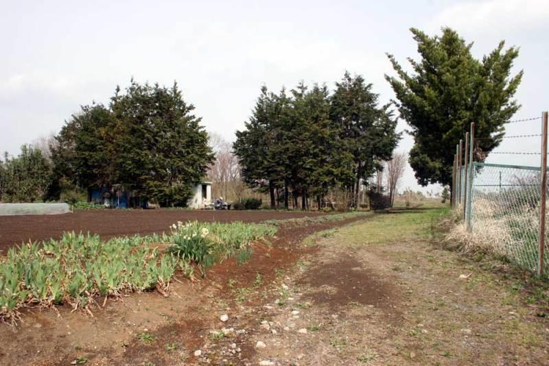 小沢城/城跡は畑に