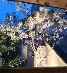 $中央区 日本橋 水天宮(人形町)の『ごちそう家 ぽん太の気まぐれ』ブログ☆-桜