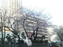 渋谷ジム会長のブログ-2013032117110000.jpg