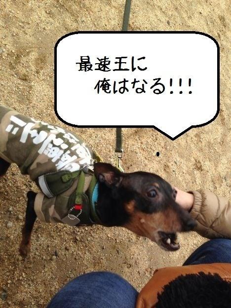ミニピン!!! 大和!!! 武蔵!!!-2013.03.21-11