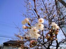 松江市雑賀公民館 STAFF BLOG-sakura322