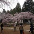 現在の桜の開花状況