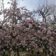 桜*・゜゚・*:.。…