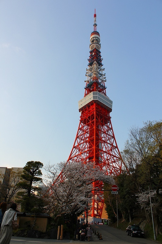 特選街情報 NX-Station Blog-東京タワーと桜