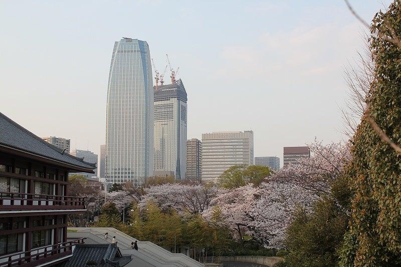 特選街情報 NX-Station Blog-増上寺境内の桜