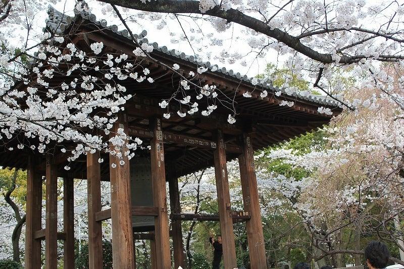 特選街情報 NX-Station Blog-鐘楼堂の桜