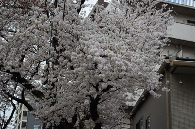 azumiのブログ