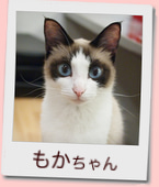 14_prof_もか